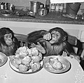 Chimpansees Hilda en Tilly uit Artis, Bestanddeelnr 917-2817.jpg