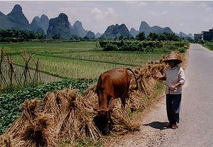 China Rice field with farmer.jpg