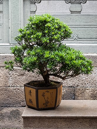 "Bonsai - Chinese Penjing specimen with decorated and relatively deep (""bowl""-style) container"