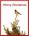 Christmas Card - Bird on Tree.jpg