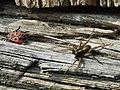 Chrząszcz i pająk - panoramio.jpg