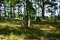 Cmentarz żydowski w Dobrodzieniu73.JPG