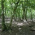 Coldfall Woods 01 MG 3569.jpg