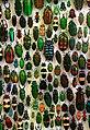Coleoptera SMNK.jpg