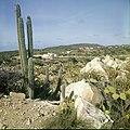Collectie Nationaal Museum van Wereldculturen TM-20029566 Gezicht op landschap met cactussen en aloe vera in de omgeving van Casibari Aruba Boy Lawson (Fotograaf).jpg
