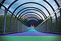 Colorful Slinky Springs (211827581).jpeg