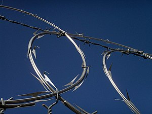My fascination again with concertina wire. I'v...