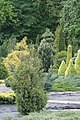 Conifers in Minsk botanical garden 06.jpg