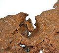 Copper-hc13b.jpg