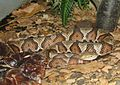 Copperhead Image 002.jpg