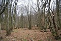 Coppiced trees in Gigmore Wood - geograph.org.uk - 1107500.jpg
