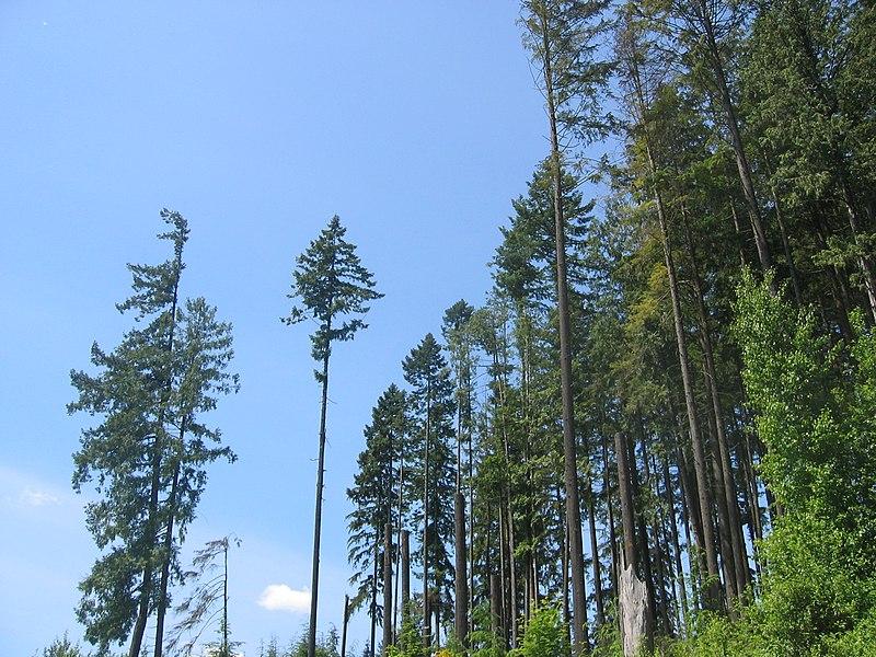 File:Coq-trees.jpg