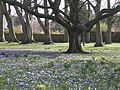 Corsehill Park - geograph.org.uk - 365258.jpg