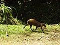 Costa Rica DSCN3243 (30308889994).jpg