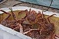 Crabs (7775003872).jpg