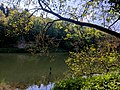 Creswell Gorge, Creswell Craggs, Notts (2).jpg