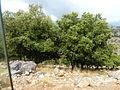 Crete P1050832.JPG