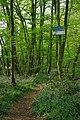 Crowsheath Wood - geograph.org.uk - 1253504.jpg