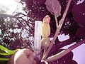 "Cucurbita maxima ""zapallo plomo"" (Costanzi temp2) flor femenina F03 dia01 pétalos cerrados regla.JPG"