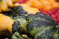 Cucurbita pepo scallop summer squash First Root Farm CSA Thirteenth Pickup -1.jpg