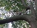 Curioso come uno scoiattolo.jpg