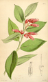 Curtis's Botanical Magazine, Plate 4344 (Volume 73, 1847).png