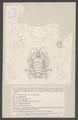 Cyamus ovalis - - Print - Iconographia Zoologica - Special Collections University of Amsterdam - UBAINV0274 006 03 0025.tif