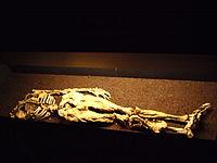 Restos mortais de Dätgen Man em exibição