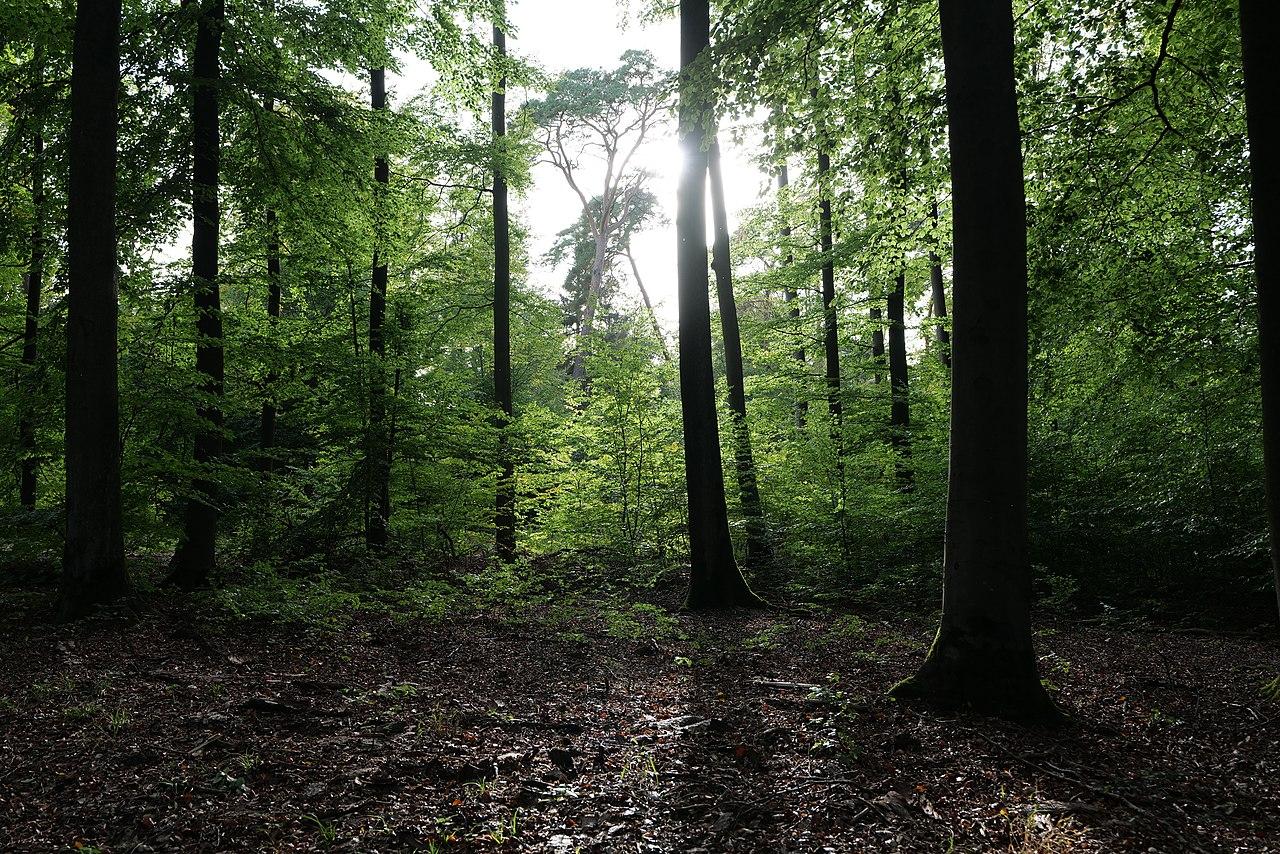 Dannenrod Forest 2020-10-04 72.jpg