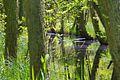 Darßwald J2A9844.jpg