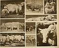 Das thierleben in Schönbrunn (1904) (20219752613).jpg