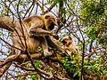 Daulatabad, Aurangabad - panoramio (33).jpg