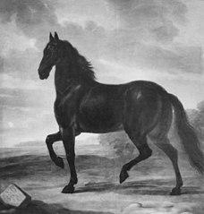Karl den XI:s häst Frisk