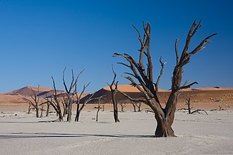 Deadvlei - Dead Acacia erioloba in Deadvlei