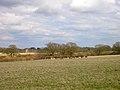 Deer, grounds of Knepp Castle. - geograph.org.uk - 149493.jpg