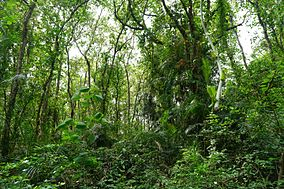 Dense Forest - Alta Dighi National Park.jpg