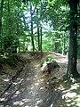 Denzlinger Wald - panoramio (2).jpg