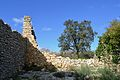 Despoblat morisc de l'Atzuvieta, murs i arbre.JPG