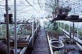 Dicksons Florist greenhouse frames 011.jpg