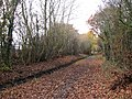 Ditch beside the path - geograph.org.uk - 1044069.jpg
