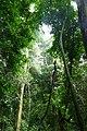 Dlinza Forest (31600478757).jpg