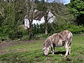 Donkey, Ulster American Folk Park - geograph.org.uk - 1303833.jpg