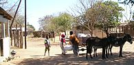 Donkey cart in Mozambique.JPG