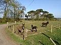 Donkeys at Tenshillingland - geograph.org.uk - 398487.jpg