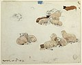 Drawing, Sheep Resting, October 15, 1878 (CH 18175191).jpg