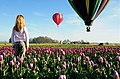 Dreamin' - Hot Air Balloon Rides - Flickr - jesse.millan.jpg