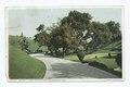 Driveway, Busch Sunken Gardens, Pasadena, Calif (NYPL b12647398-70035).tiff