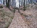 Droužkovská cesta, od Náckovy rokle ke Mšenu.jpg