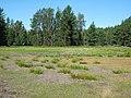Duck Lake - panoramio.jpg