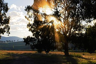 Dust sunbeams through tree.jpg
